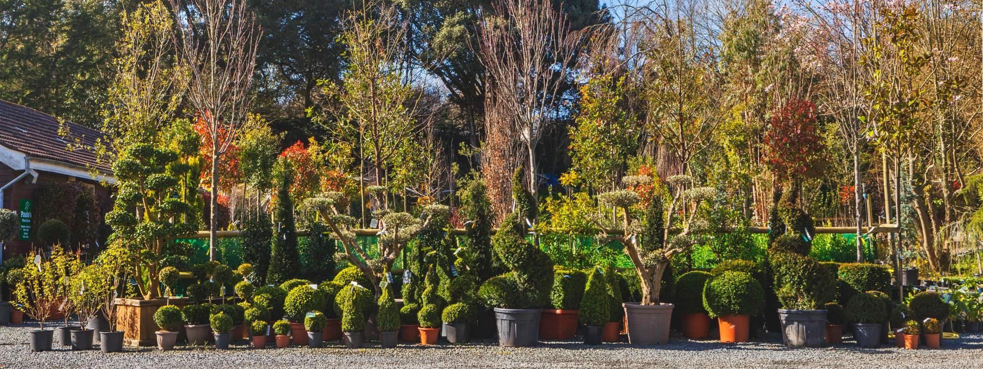 Paulo\'s | Plant Centre & Gardening Works Ltd